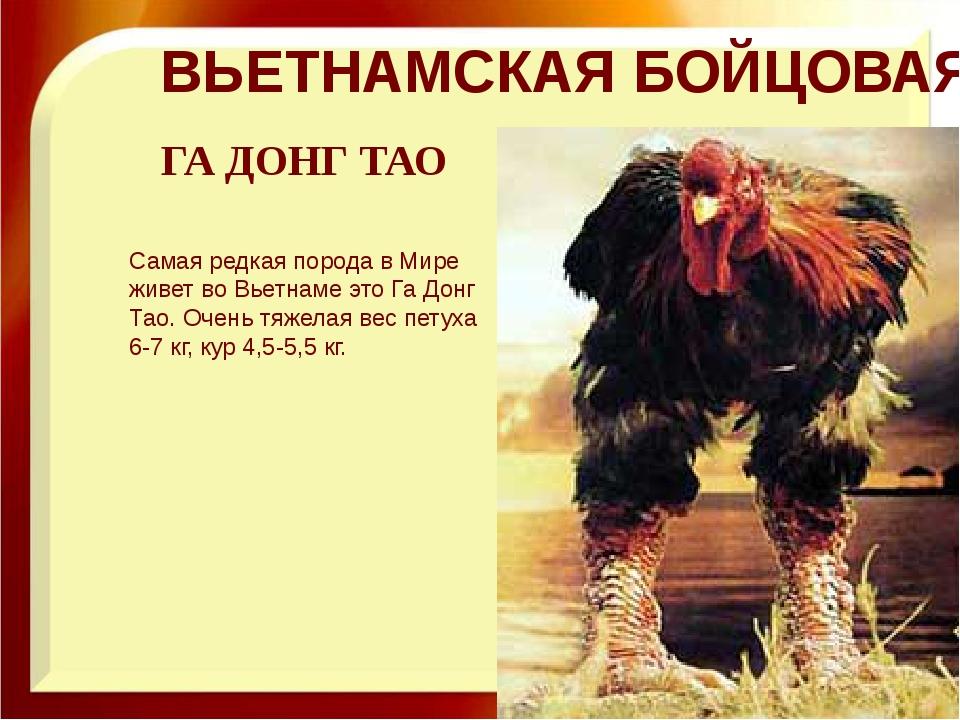 ВЬЕТНАМСКАЯ БОЙЦОВАЯ Самая редкая порода в Мире живет во Вьетнаме это Га Донг...
