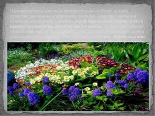 Первоцветы очень красивы и привлекательны, особенно фиалка душистая, цикламен