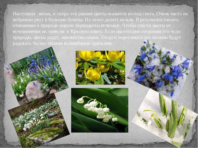 Наступила весна, и скоро эти ранние цветы появятся из-под снега. Очень часто...