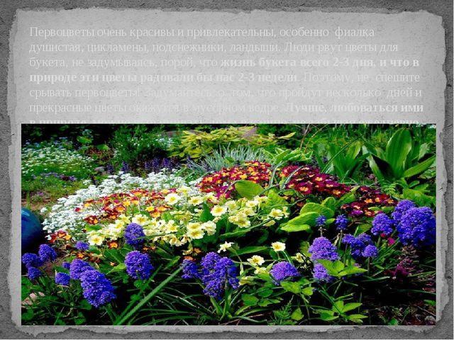 Первоцветы очень красивы и привлекательны, особенно фиалка душистая, цикламен...