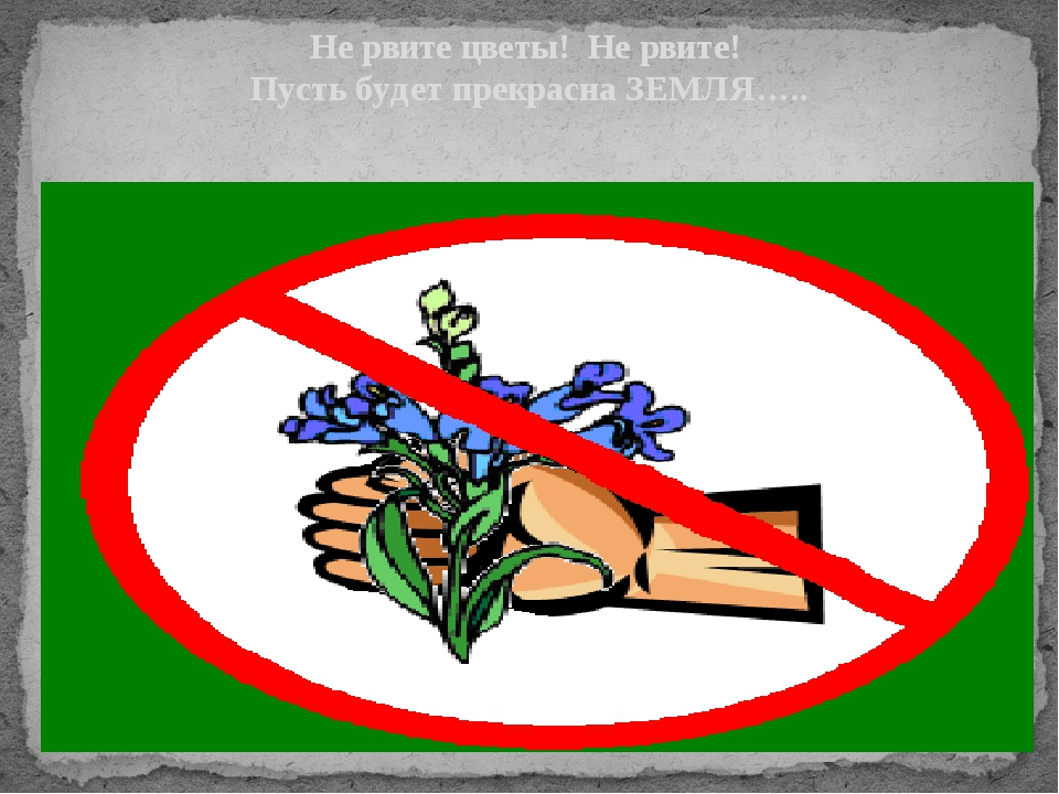 Не рвите цветы! Не рвите! Пусть будет прекрасна ЗЕМЛЯ…..