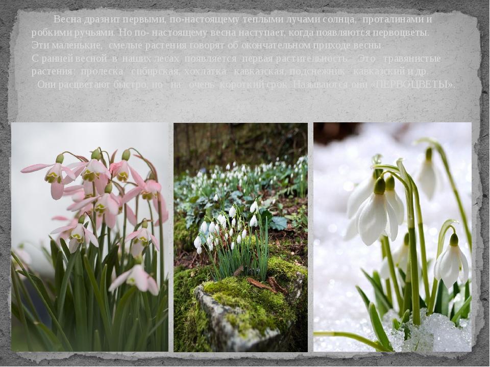 Весна дразнит первыми, по-настоящему теплыми лучами солнца, проталинами и ро...