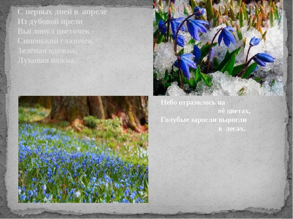 С первых дней в апреле Из дубовой прели Выглянул цветочек - Синенький глазоче...