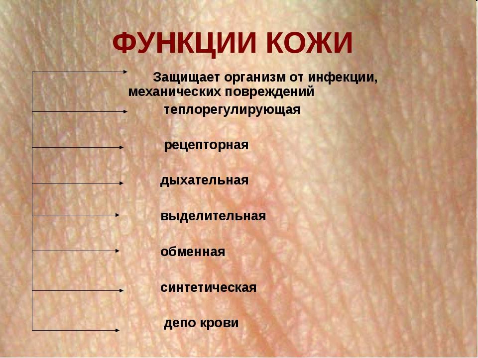 что функции кожи человека реферат с картинками протяжении
