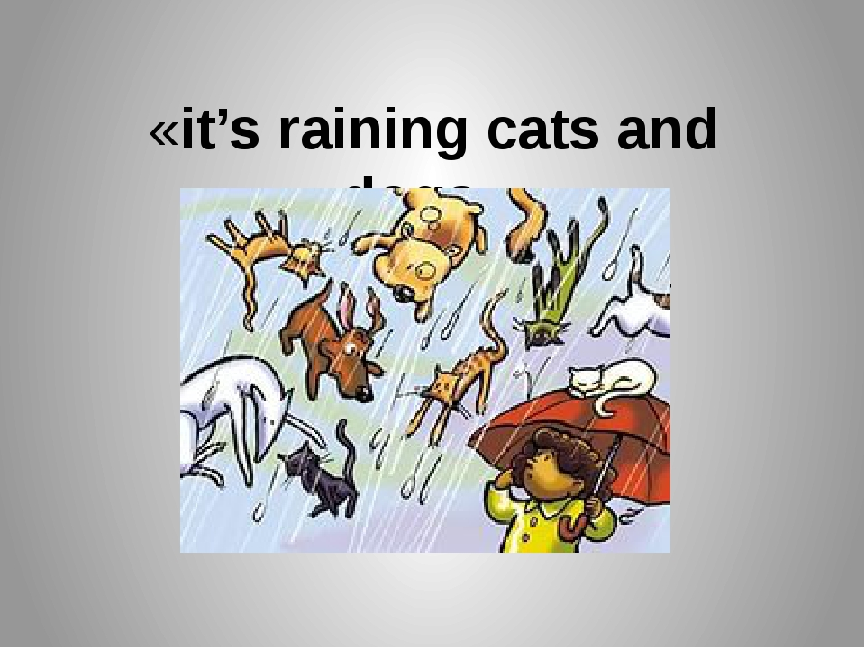 «it's raining cats and dogs». Льёт как из ведра