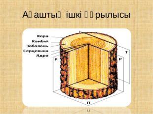 Ағаштың ішкі құрылысы