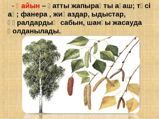 - Қайын – қатты жапырақты ағаш; түсі ақ; фанера , жиһаздар, ыдыстар, құралдар...