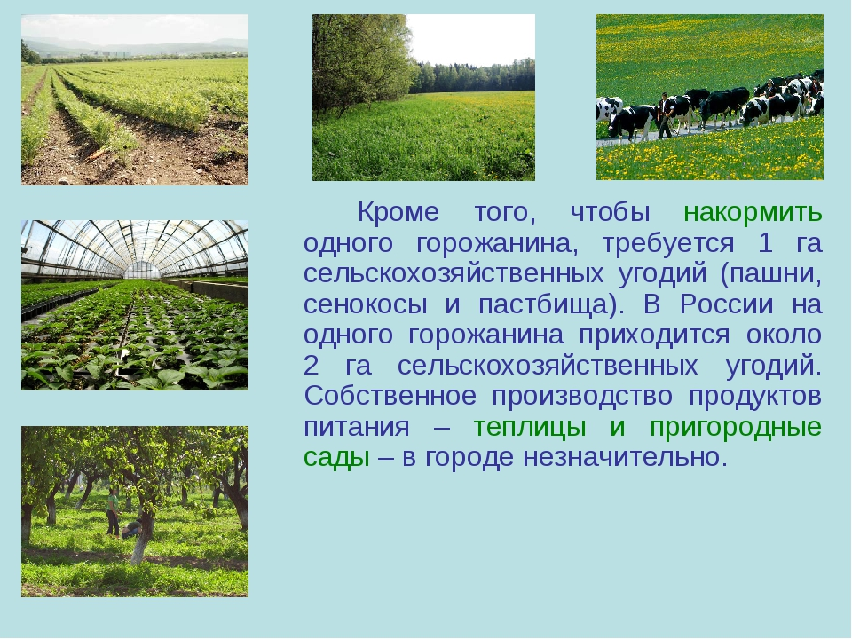 Кроме того, чтобы накормить одного горожанина, требуется 1 га сельскохозяйс...
