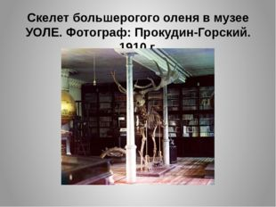 Скелет большерогого оленя в музее УОЛЕ. Фотограф: Прокудин-Горский. 1910 г.