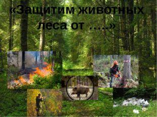«Защитим животных леса от …..»