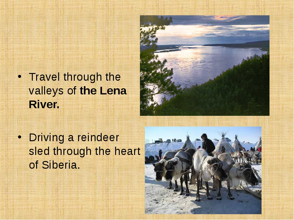 Travel through the valleys of the Lena River. Driving a reindeer sled throug...
