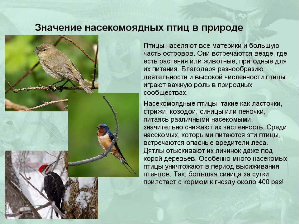 Екатеринбурге ищут роль птиц в природе и для челтвека работа