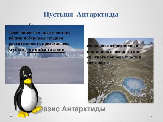 Пустыня Антарктиды Оазис Антарктиды (свободные ото льда участки) вблизи побер...