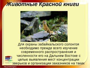 Животные Красной книги Для охраны забайкальского солонгоя необходимо прежде в