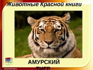 Животные Красной книги АМУРСКИЙ ТИГР