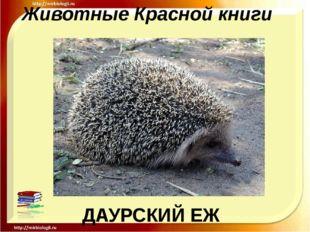 Животные Красной книги ДАУРСКИЙ ЕЖ
