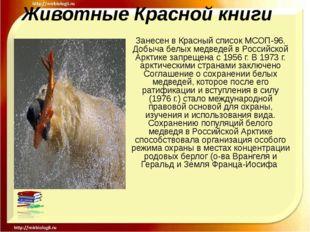 Животные Красной книги Занесен в Красный список МСОП-96. Добыча белых медведе