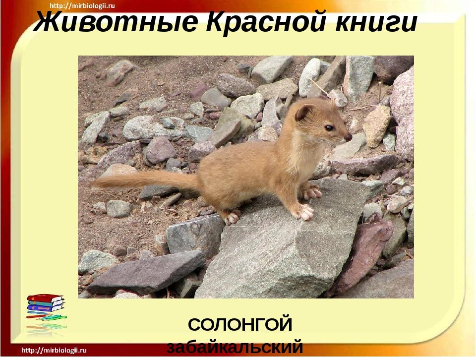 Животные Красной книги СОЛОНГОЙ забайкальский