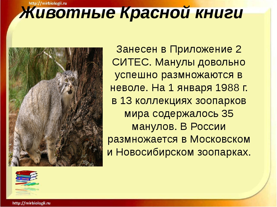 Животные Красной книги Занесен в Приложение 2 СИТЕС. Манулы довольно успешно...