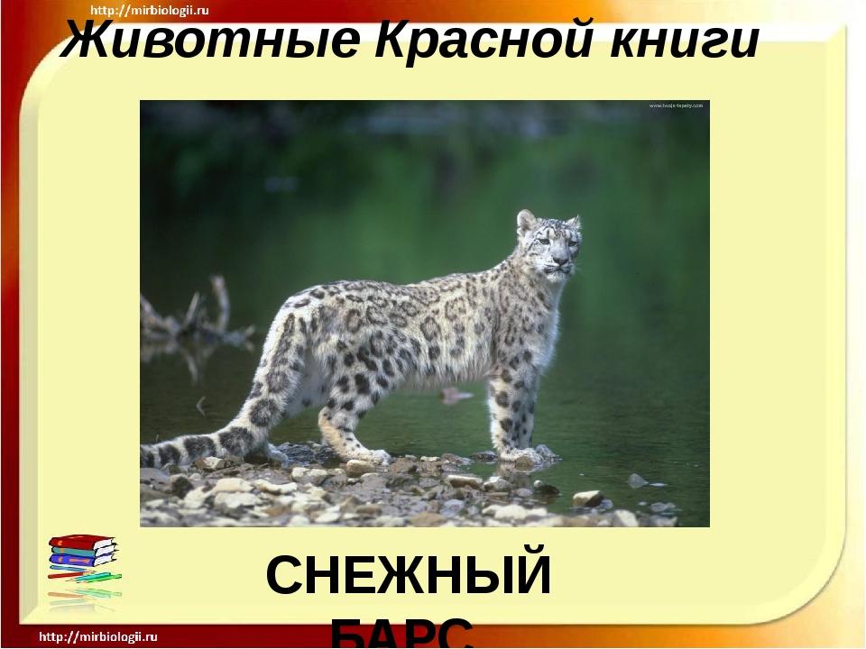 Животные Красной книги СНЕЖНЫЙ БАРС