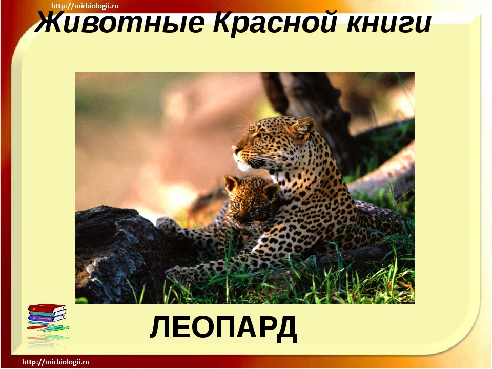 Животные Красной книги ЛЕОПАРД
