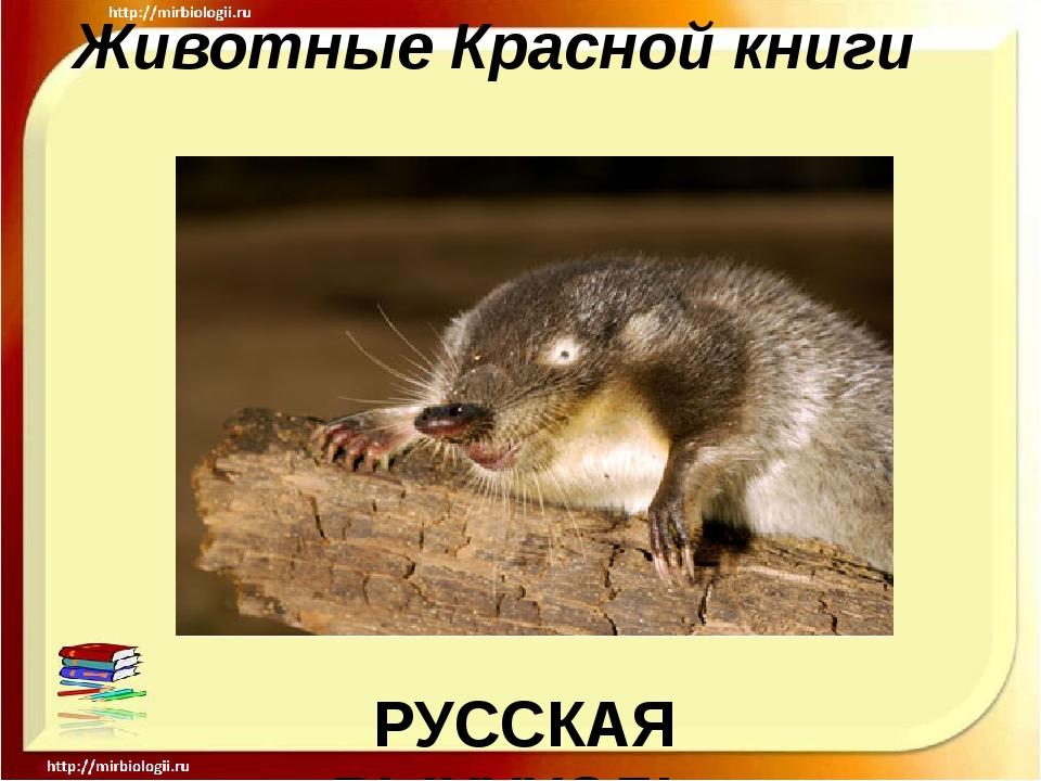 Животные Красной книги РУССКАЯ ВЫХУХОЛЬ