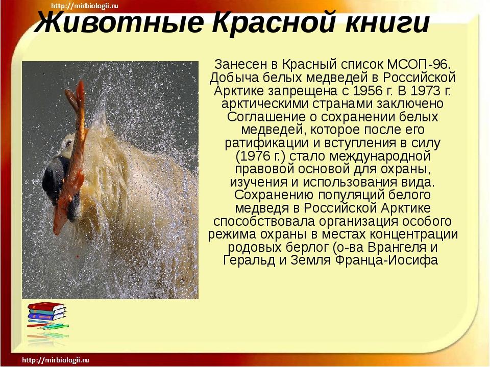 Животные Красной книги Занесен в Красный список МСОП-96. Добыча белых медведе...