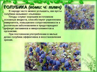 ГОЛУБИКА(коми: чӧтлач) В народе часто можно услышать, как кусты голубики наз