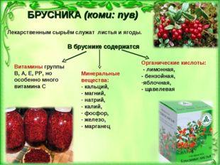 БРУСНИКА(коми: пув) Лекарственным сырьём служат листья и ягоды. В бруснике с