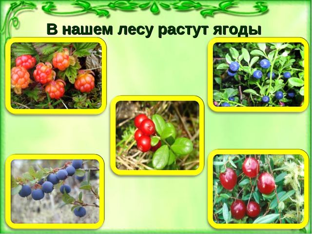 В нашем лесу растут ягоды