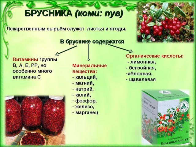 БРУСНИКА(коми: пув) Лекарственным сырьём служат листья и ягоды. В бруснике с...