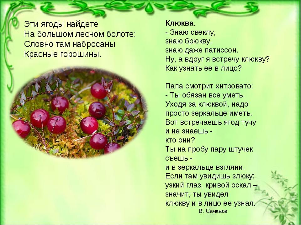 Эти ягоды найдете На большом лесном болоте: Словно там набросаны Красные горо...