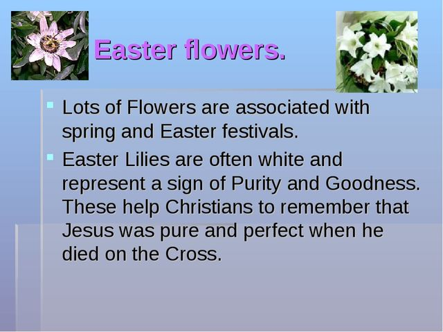 Easter flowers. Lots of Flowers are associated with spring and Easter festiva...