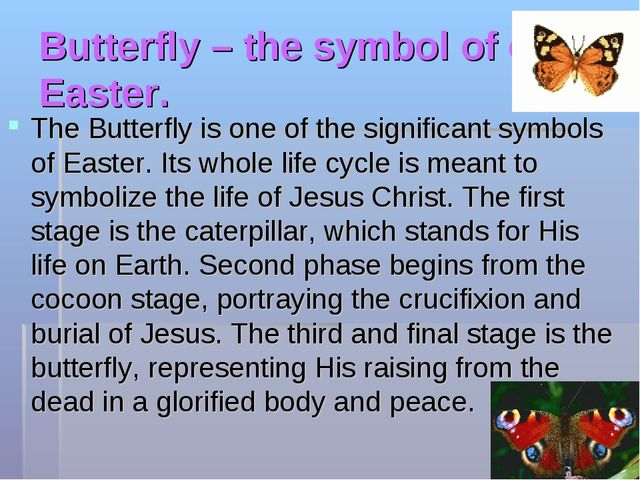 Butterfly – the symbol of of Easter. The Butterfly is one of the significant...