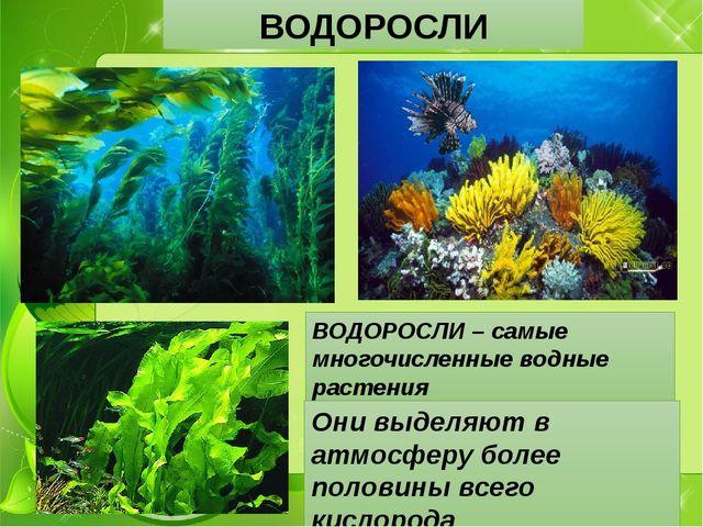 ВОДОРОСЛИ ВОДОРОСЛИ – самые многочисленные водные растения Они выделяют в атм...