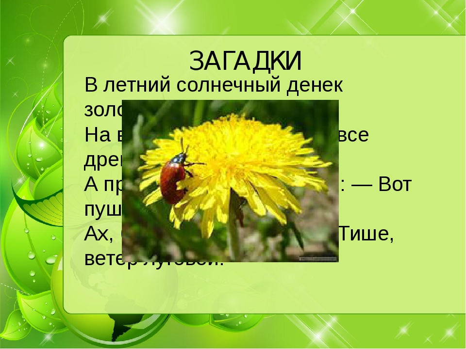 ЗАГАДКИ В летний солнечный денек золотой расцвел цветок, На высокой тонкой н...