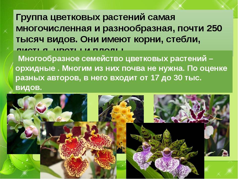 Группа цветковых растений самая многочисленная и разнообразная, почти 250 тыс...