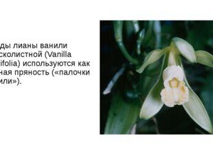 Плоды лианы ванили плосколистной (Vanilla planifolia) используются как ценная
