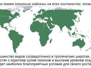 В наше время орхидные найдены на всех континентах, кроме Антарктиды. Большинс