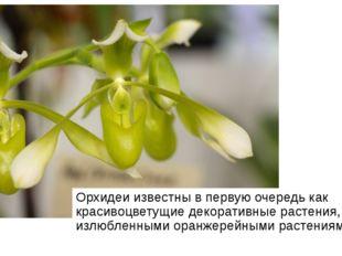 Орхидеи известны в первую очередь как красивоцветущие декоративные растения,
