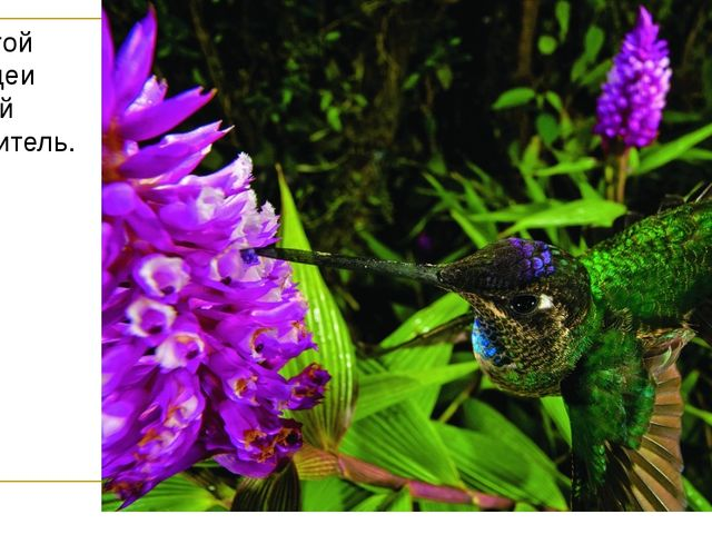 А у этой орхидеи другой опылитель.