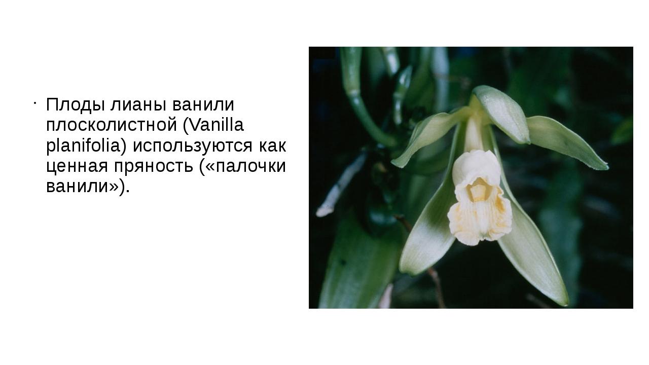 Плоды лианы ванили плосколистной (Vanilla planifolia) используются как ценная...