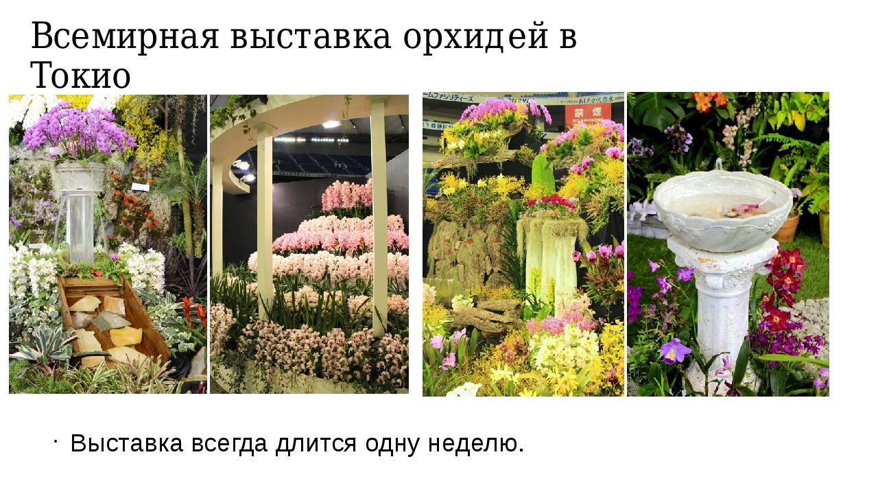 Всемирная выставка орхидей в Токио Выставка всегда длится одну неделю.