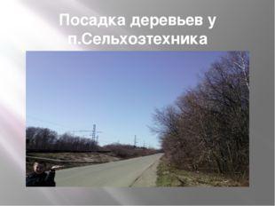 Посадка деревьев у п.Сельхозтехника