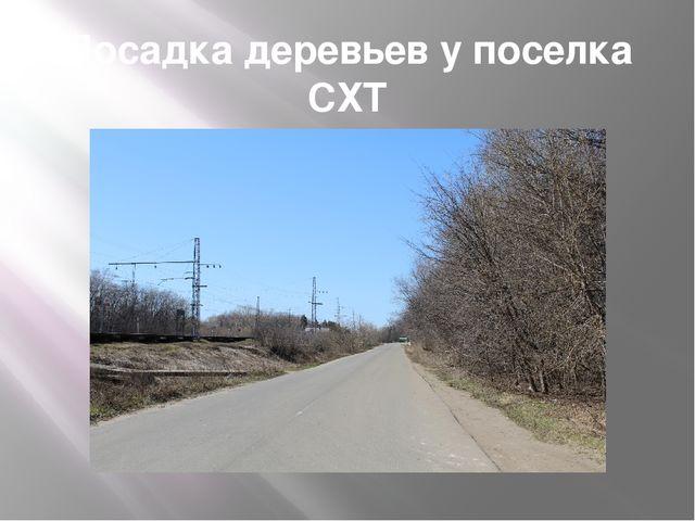 Посадка деревьев у поселка СХТ