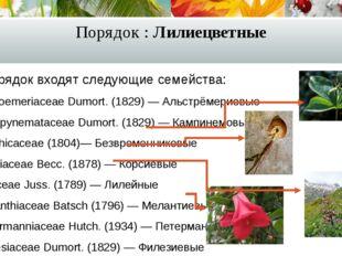 Порядок : Лилиецветные В порядок входят следующие семейства: Alstroemeriaceae