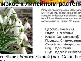 Подсне́жник белосне́жный (лат. Galánthus nivális) Растение распространено в Ц