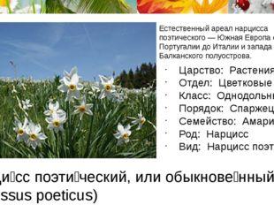 Нарци́сс поэти́ческий, или обыкнове́нный (лат. Narcissus poeticus) Естественн