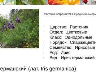 Ирис германский (лат. Iris germanica) Растение встречается в Средиземноморье.