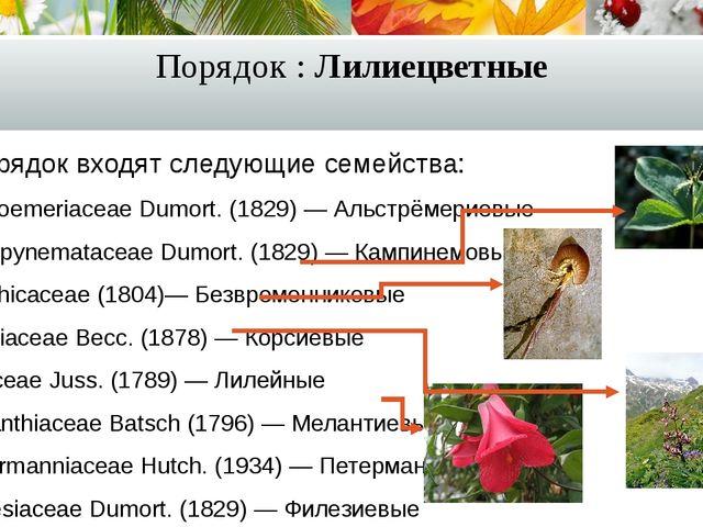 Порядок : Лилиецветные В порядок входят следующие семейства: Alstroemeriaceae...